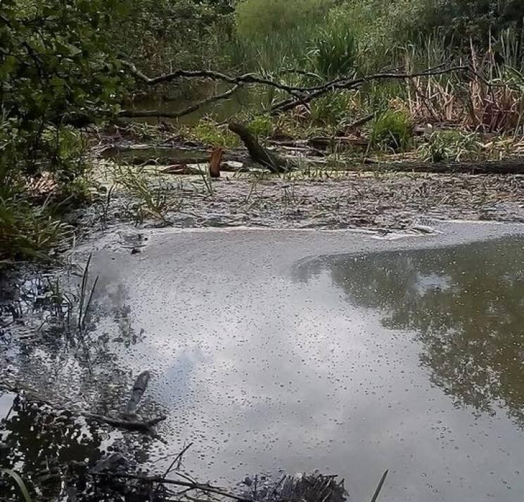Екологи Хмельниччини підтвердили забрудненість води в Случі