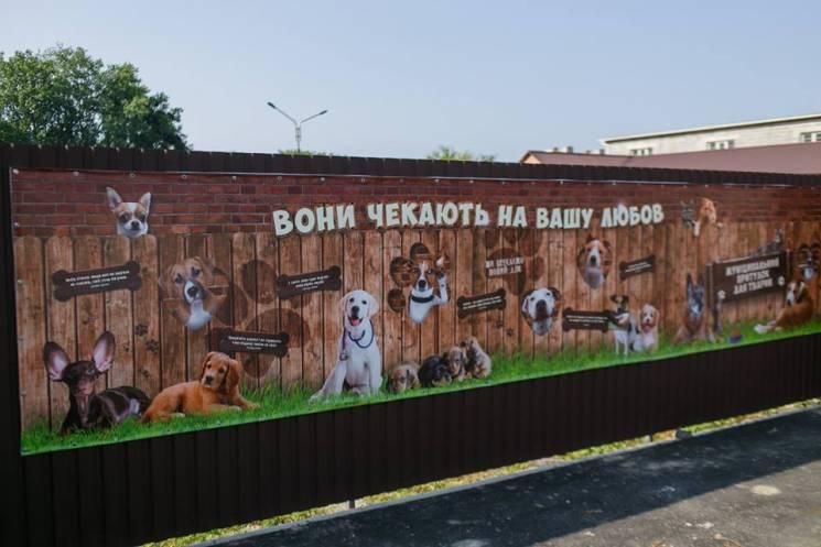 Моргунов показав свою кішку і запропонував флешмоб на захист тварин (ФОТО)