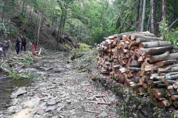 Лісова галузь Закарпаття стала заручником брудних міжусобиць, у які втягують журналістів, - Москаль