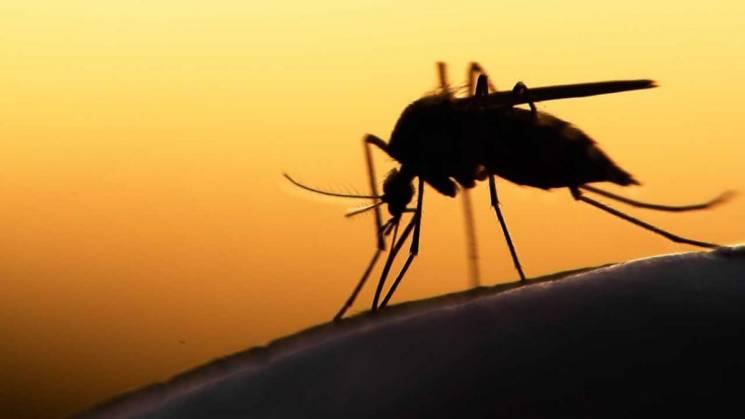 Привіт із Конго: У Києві від малярії померли дві людини