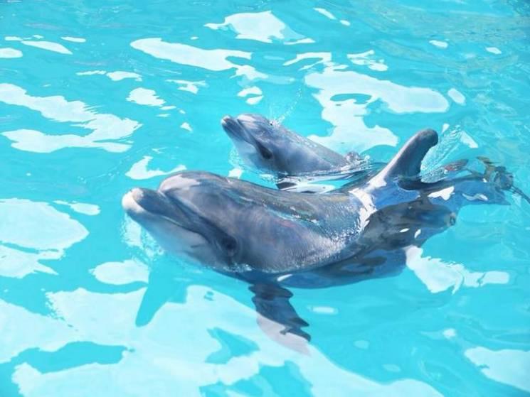 В одеському дельфинарії під час виступу народилося дельфиня (ФОТО)
