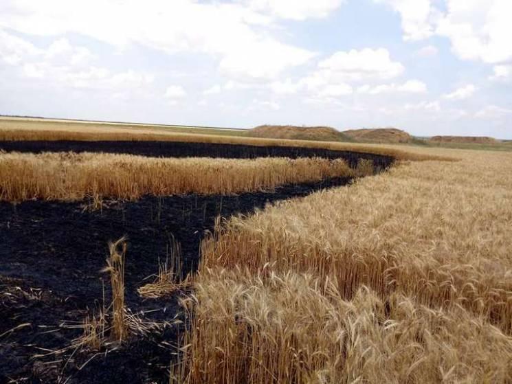 На Одещині в прикордонному селі невідомі спалили поле з врожаєм (ФОТО)