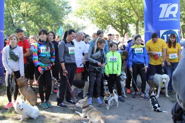 Вівчарки, мопси і тойтер'єри: Як чотирилапі бігуни рекорд встановлювали (ФОТО)