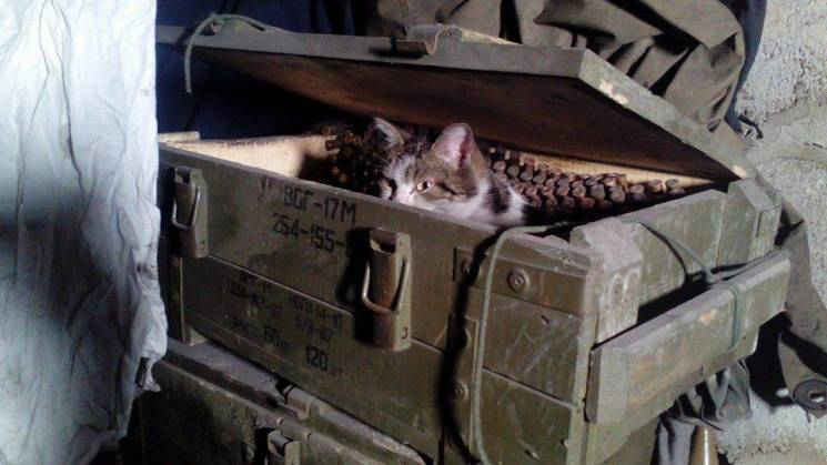 За що котам в ООС треба поставити пам'ятник - 36