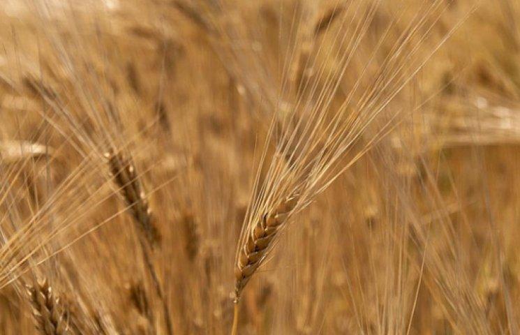В Украине на 62% выросли цены на сельхозпродукцию