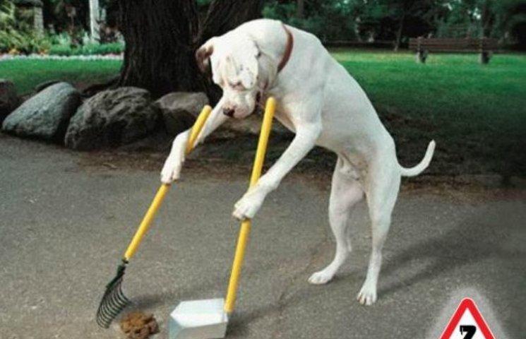 Миколаївських собачників змусять прибирати за чотирилапими