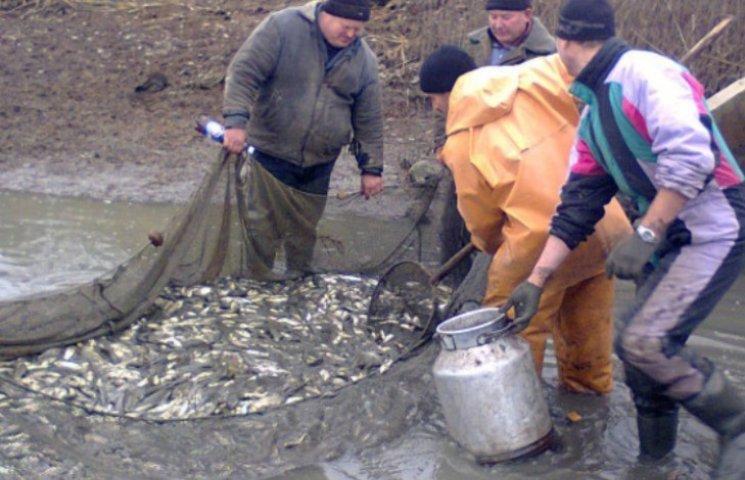 На Миколаївщині в Південний Буг відпустили 4 тис. рибин Білого Амура
