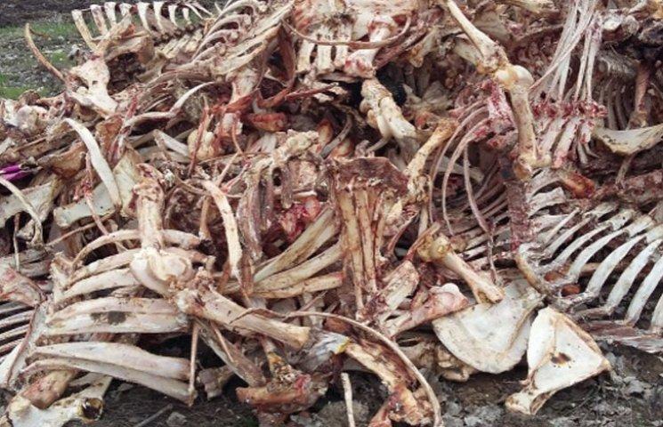 На Запоріжжі біля кладовища знайшли моторошні кістки
