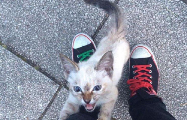 Як кошеня знайшло свого власника у парку