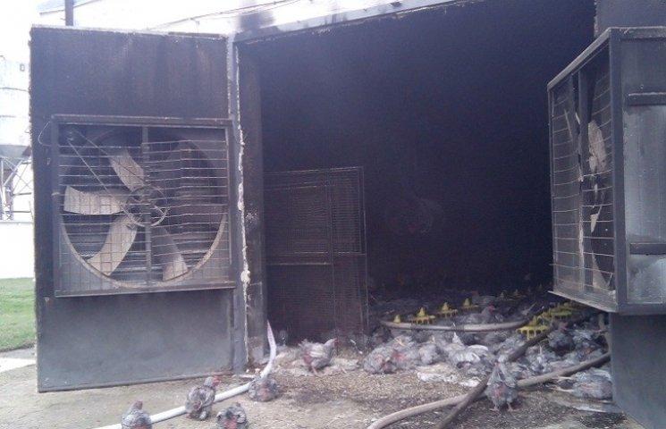 П'ять тисяч курей загинули в пожежі на Запоріжжі