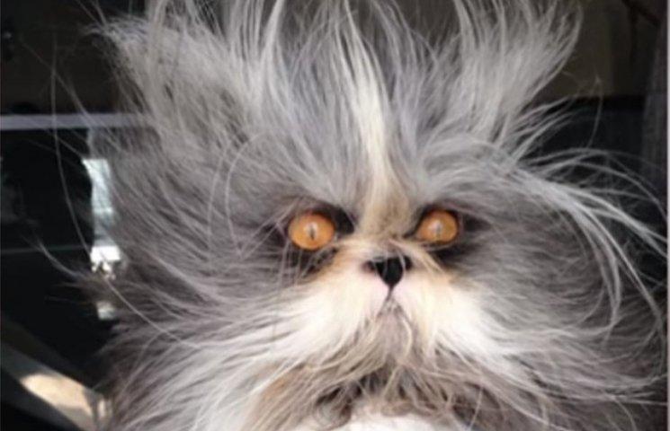 Як кіт з дивною зачіскою на камеру красується