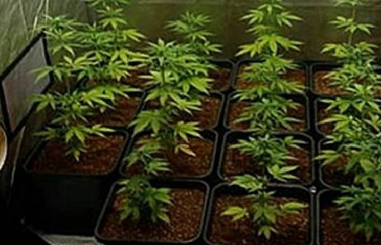 Запорізький студент облаштував у квартирі лабораторію для вирощування коноплі