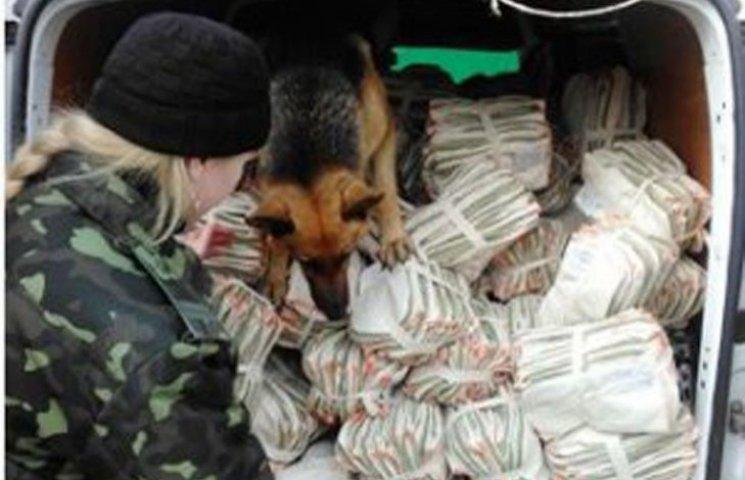 У Запорізькій колонії службові собаки обшукували автомобілі