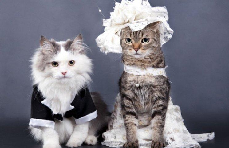 Депутатів знімають з чартерів і відправляють у БПП та як вийти заміж за 27 хвилин