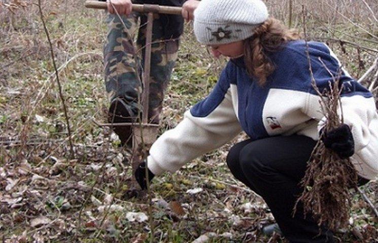 На Вінниччині екологи висадили 5 тисяч дубів