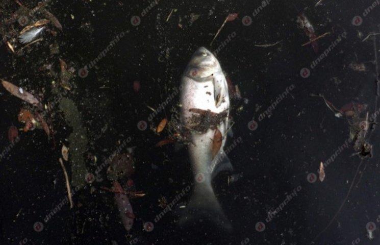 У озері центрального парку Дніпропетровська здохла риба