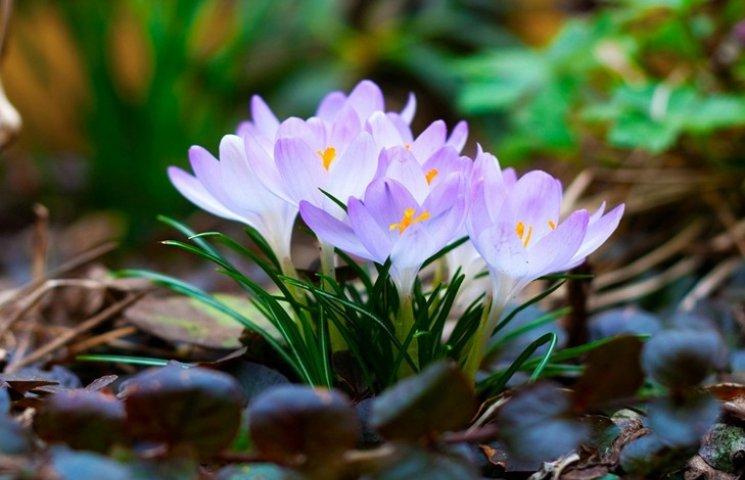 Зустрічай квітень: ТОП-7 гаджетів і цікавинок для крутої весни