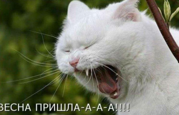 Сьогодні – Міжнародний день котів
