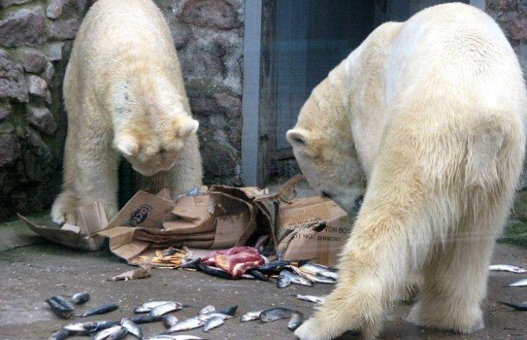 У Миколаївському зоопарку відзначили Міжнародний день білого ведмедя