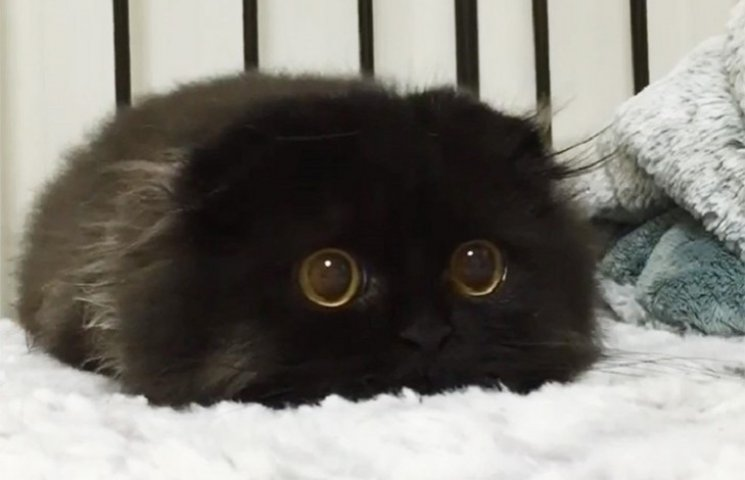 Кіт з величезними очима підірвав інтернет