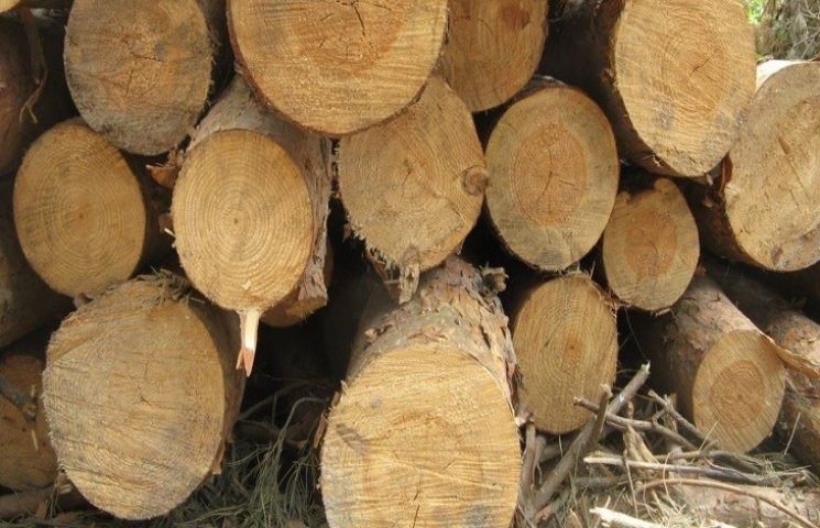 У Нетішині поліція розслідує незаконну вирубку дерев