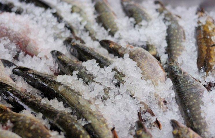 Для запобігання рибного браконьєрства створюються рибні біржі