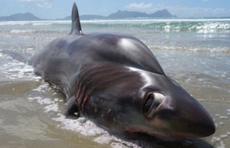 Турист знайшов жахливу акулу з дивними очима та великим горбом