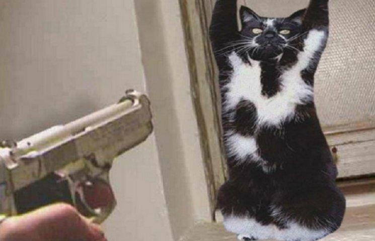 Кошка, которая поднимает лапы вверх, стала звездой интернета