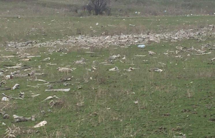 Жителі села на Миколаївщині поскаржилися на стихійний скотомогильник