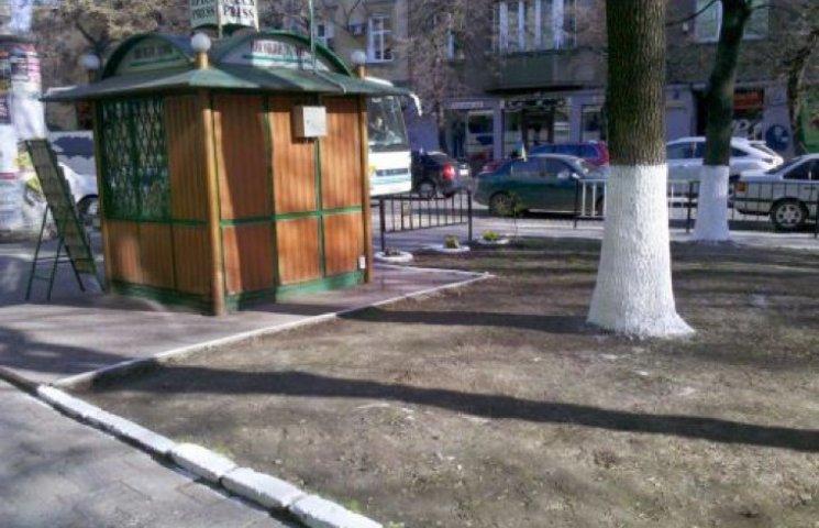 У Славуті незадоволені побілкою дерев