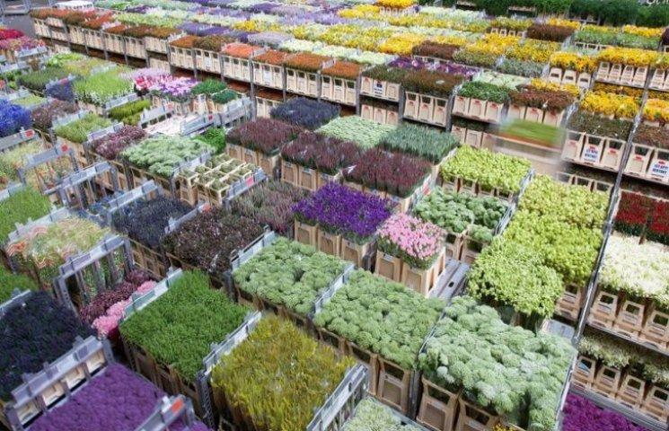 На 8 Березня українці дарують 80% голандських квітів