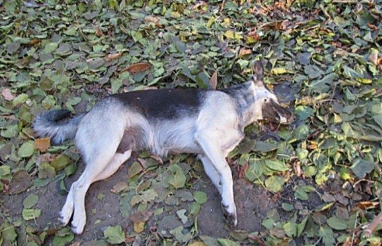 У Миколаєві невідомі труять вуличних собак