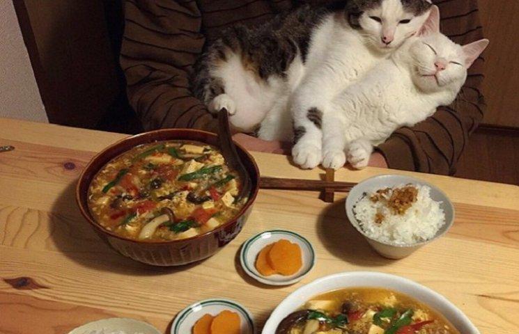 Как два котика из Японии обожают смотреть на трапезу своих хозяев