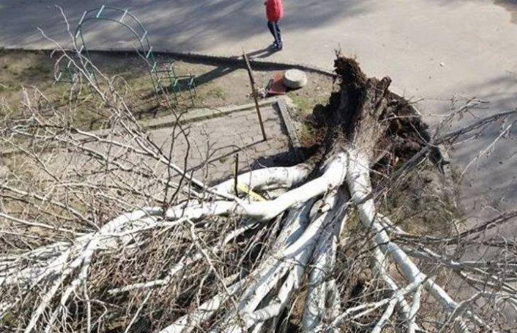 У центрі Миколаєва завалилася тополя: є постраждалі