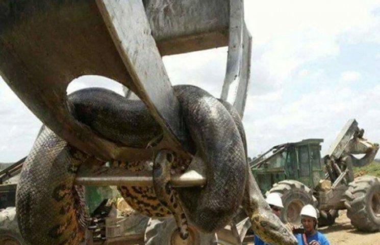 Гігантську 400-кілограмову анаконду знайшли в Бразилії