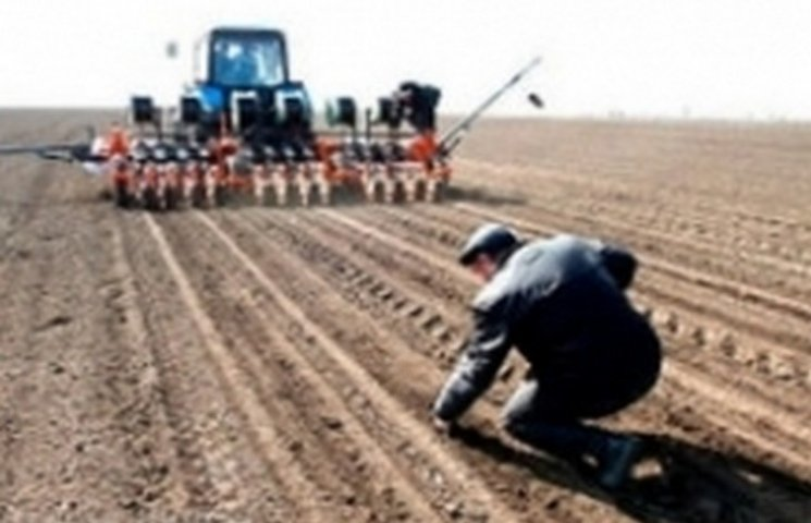 На Хмельниччині дві третіх озимих посівів перебувають в гарному стані