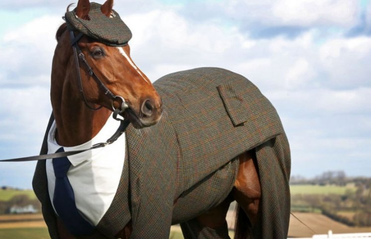 Кто, кто?! Конь в костюме: как конь в стильном костюме стал звездой сети