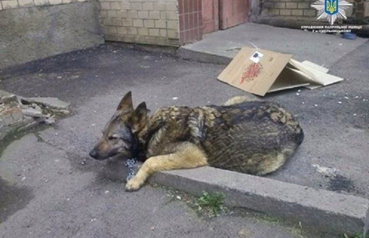 У Хмельницькому патрульні поліцейські врятували життя собаці