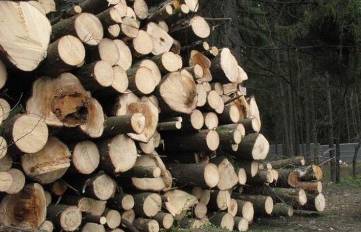 На Вінниччині посадовці незаконно зрубали півтори тисячі дерев