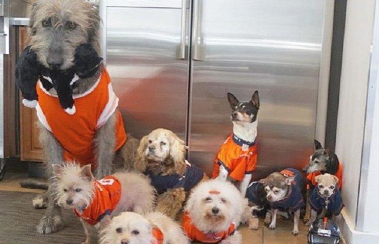 Як американець присвятив своє життя порятунку старих собак