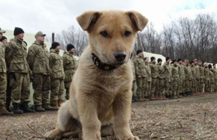 Чим займаються на Донбасі найкращі друзі бійців АТО