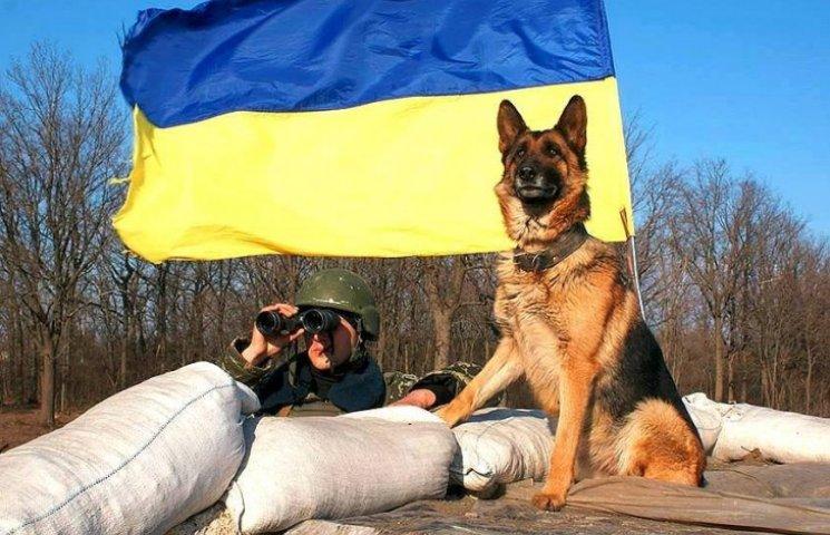 Чем занимаются на Донбассе лучшие друзья бойцов АТО - 2