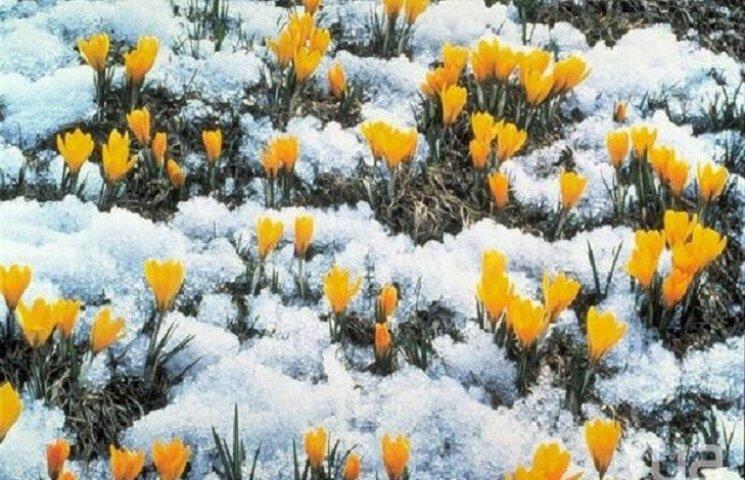 У Хмельницькому синоптики обіцяють дрібний сніг у другій половині дня