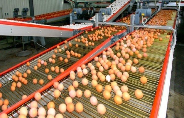 На Хмельниччині зменшилось виробництво яєць