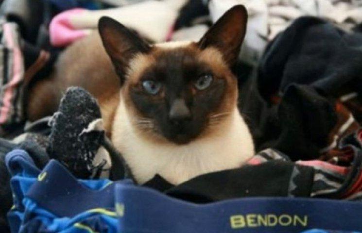 В Новой Зеландии поймали кота, который крал мужское белье
