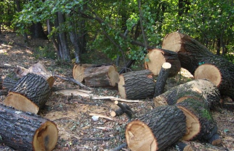 Понад 3,4 мільйонів гривень отримали бюджети Хмельниччини від заготівлі деревини