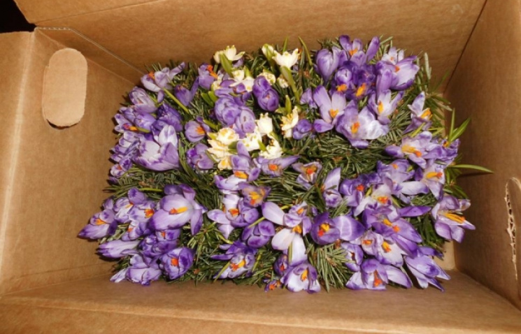 Із Закарпаття контрабандою вивозять квіти