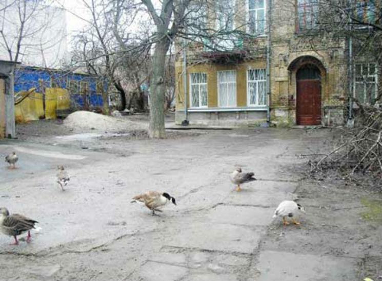 ВКиеве живодеры отравили уникальных птиц
