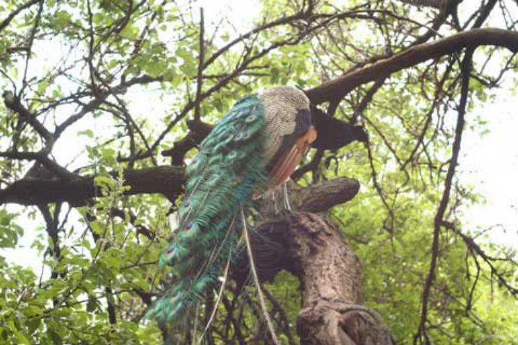 Киевлянин продемонстрировал неповторимую коллекцию отравленных птиц