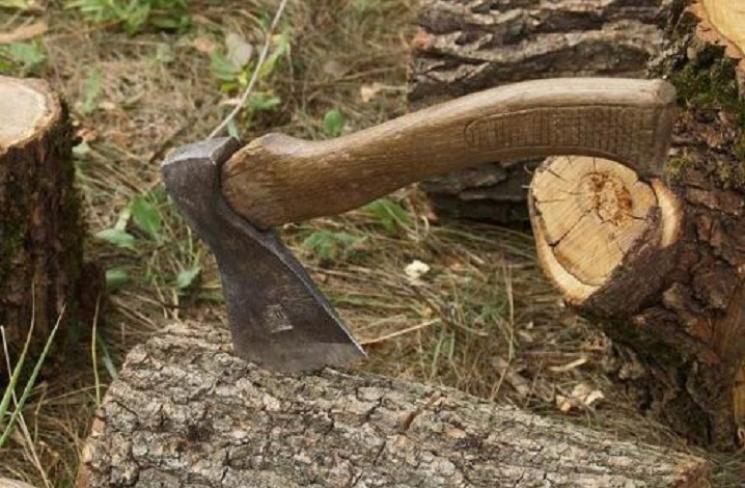На Закарпатті під час незаконної рубки дерево вбило чоловіка